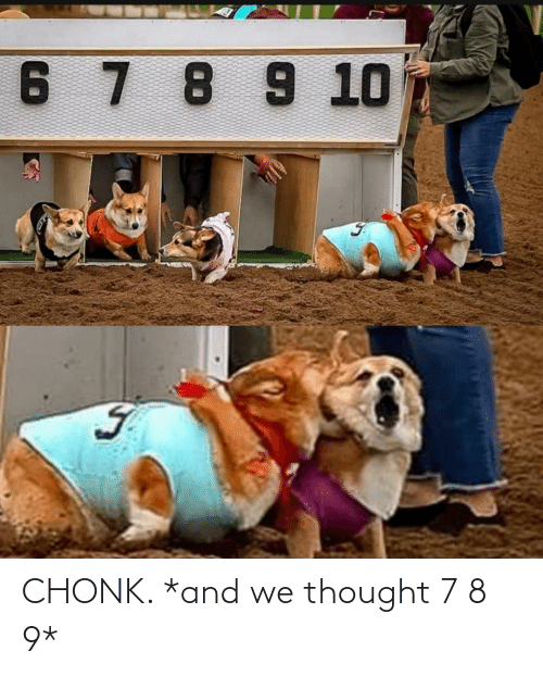 7 8: CHONK. *and we thought 7 8 9*