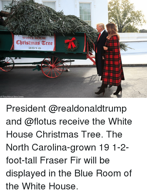 fir: Christmas Tree  201 8  AP Photo/Manuel Balce Ceneta President @realdonaldtrump and @flotus receive the White House Christmas Tree. The North Carolina-grown 19 1-2-foot-tall Fraser Fir will be displayed in the Blue Room of the White House.