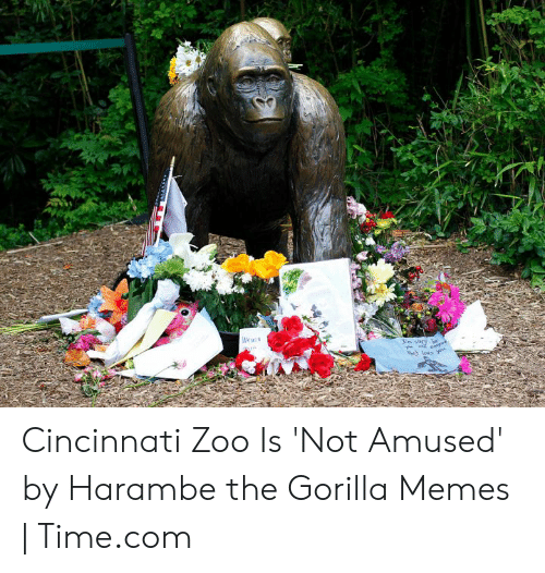 Memes, Time, and Harambe: Cincinnati Zoo Is 'Not Amused' by Harambe the Gorilla Memes | Time.com