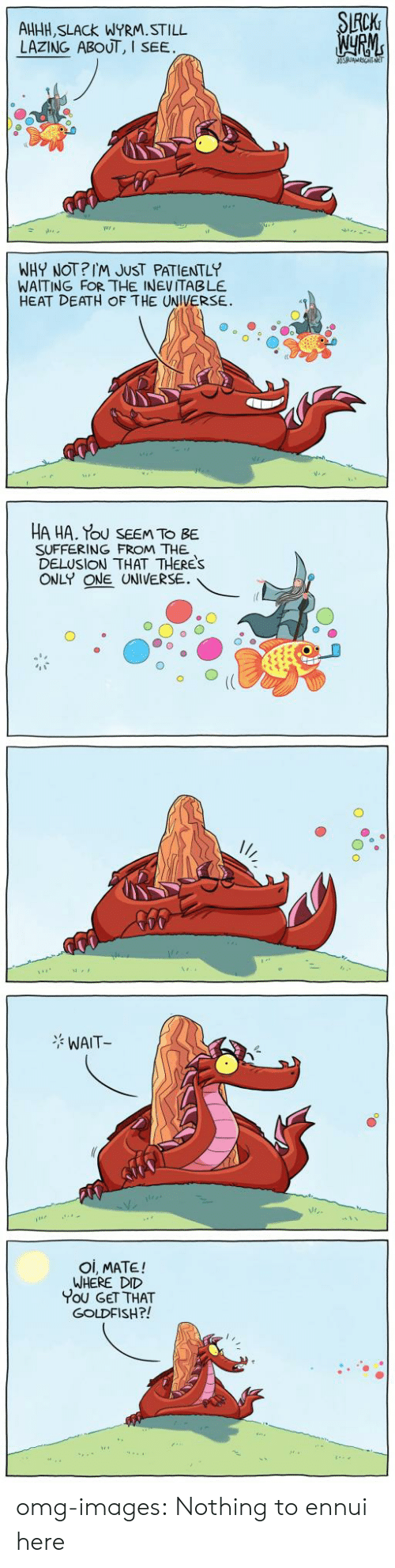 Delusion: CK  AHHH, SLACk WYRM.STILL  LAZING ABOUT, I  SEE  WHY NOT?IM JUST PATIENTLY  WAITING FOR THE INEVITABLE  HEAT DEATH OF THE UNIVERSE.  HA HA. Tou SEEM TO BE  SUFFERING FROM THE  DELUSION THAT THERES  ONLY ONE UNIVERSE.  WAIT  Oi, MATE!  WHERE DID  You GET THAT  GOLDFISH?! omg-images:  Nothing to ennui here