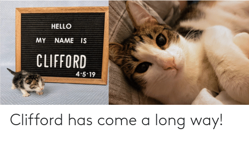clifford: Clifford has come a long way!