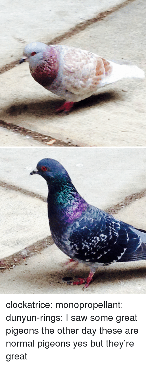 Saw, Tumblr, and Blog: clockatrice: monopropellant:  dunyun-rings:  I saw some great pigeons the other day  these are normal pigeons  yes but they're great