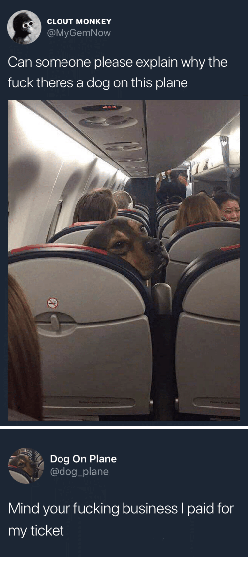 Fucking, Business, and Fuck: CLOUT MONKEY  @MyGemNow  Can someone please explain why the  fuck theres a dog on this plane   Dog On Plane  @dog_plane  Mind your fucking business I paid for  my ticket