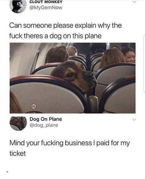 Monkey: CLOUT MONKEY  @MyGemNow  Can someone please explain why the  fuck theres a dog on this plane  Dog On Plane  @dog_plane  Mind your fucking business I paid for my  ticket .
