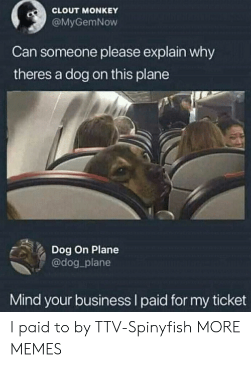 Monkey: CLOUT MONKEY  @MyGemNow  Can someone please explain why  theres a dog on this plane  Dog On Plane  @dog_plane  Mind your business I paid for my ticket I paid to by TTV-Spinyfish MORE MEMES