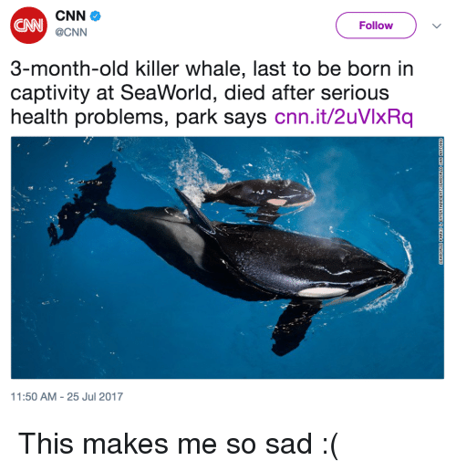 killer whale: CN  Follow  @CNN  3-month-old killer whale, last to be born in  captivity at SeaWorld, died after serious  health problems, park says cnn.it/2uVlxRq  1:50 AM-25 Jul 2017 <p>This makes me so sad :(</p>