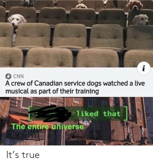 cnn.com, Dogs, and True: CNN  A crew of Canadian service dogs watched a live  musical as part of their training  liked that  The entire universe It's true