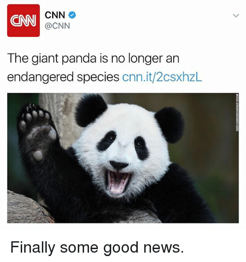 giant panda: CNN  CNN  @CNN  The giant panda is no longer an  endangered species  cnn.it/2csxhzL Finally some good news.