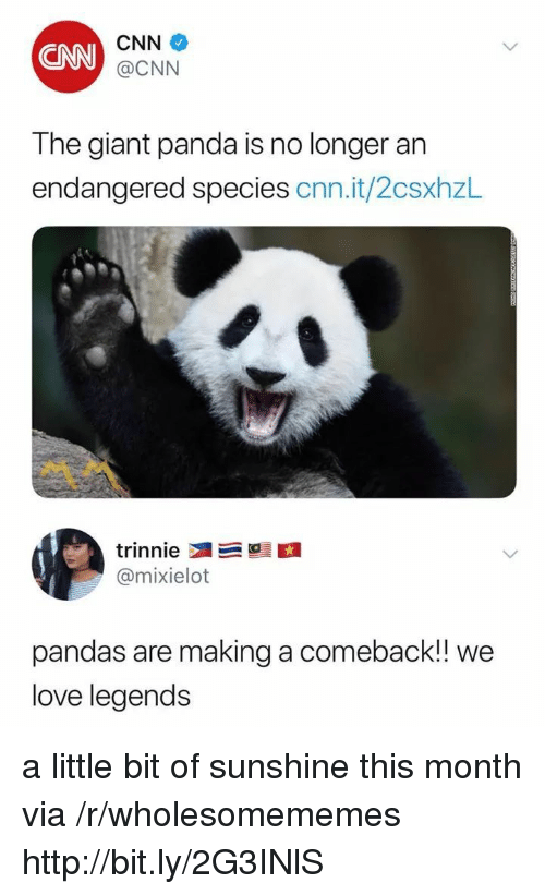 giant panda: CNN  CNN  @CNN  The giant panda is no longer an  endangered species cnn.it/2csxhzL  @mixielot  pandas are making a comeback! we  love legends a little bit of sunshine this month via /r/wholesomememes http://bit.ly/2G3INlS