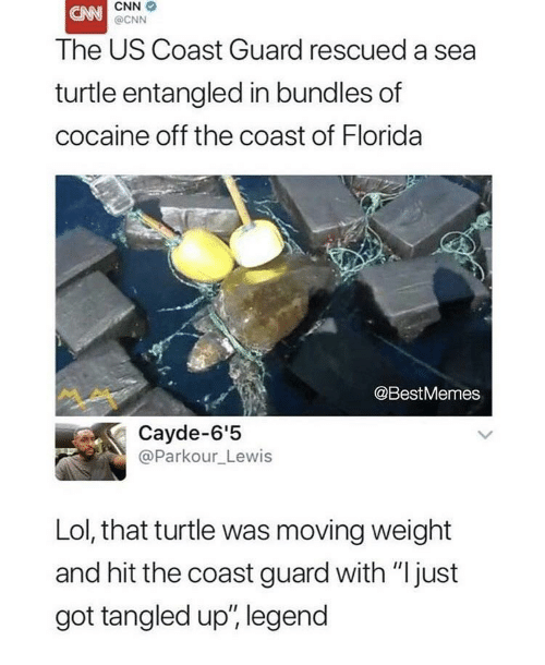 "cnn.com, Lol, and Cocaine: CNN  @CNN  The US Coast Guard rescued a sea  turtle entangled in bundles of  cocaine off the coast of Florida  @BestMemes  Cayde-6'5  @Parkour_Lewis  Lol, that turtle was moving weight  and hit the coast guard with ""just  got tangled up', legend"