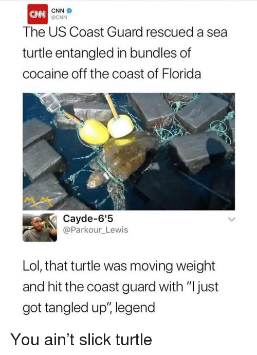"cnn.com, Funny, and Lol: CNN  The US Coast Guard rescued a sea  turtle entangled in bundles of  cocaine off the coast of Florida  @CNN  Cayde-6'5  @Parkour_Lewis  Lol, that turtle was moving weight  and hit the coast guard with ""ljust  got tangled up, legend  111; You ain't slick turtle"