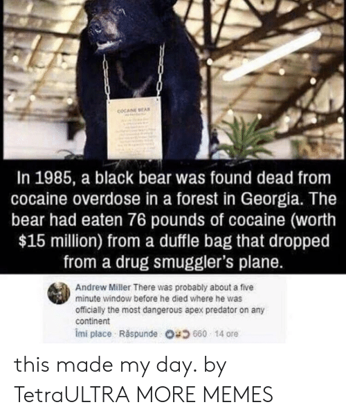 Ored: COCAINE EA  In 1985, a black bear was found dead from  cocaine overdose in a forest in Georgia. The  bear had eaten 76 pounds of cocaine (worth  $15 million) from a duffle bag that dropped  from a drug smuggler's plane.  Andrew Miller There was probably about a five  minute window before he died where he was  officially the most dangerous apex predator on any  continent  imi place . Răspunde 680 14 ore this made my day. by TetraULTRA MORE MEMES