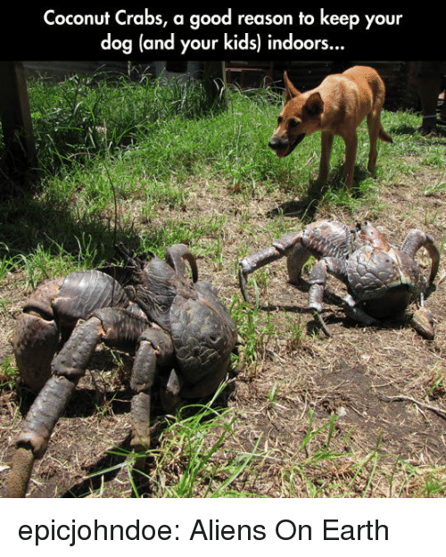 Tumblr, Aliens, and Blog: Coconut Crabs, a good reason to keep your  dog (and your kids) indoors.  .. epicjohndoe:  Aliens On Earth