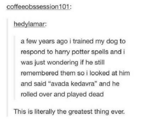 """A Few Years Ago: coffeeobssession 101:  hedylamar:  a few years ago i trained my dog to  respond to harry potter spells and i  was just wondering if he still  remembered them so i looked at him  and said """"  rolled over and played dead  avada kedavra"""" and he  This is literally the greatest thing ever."""