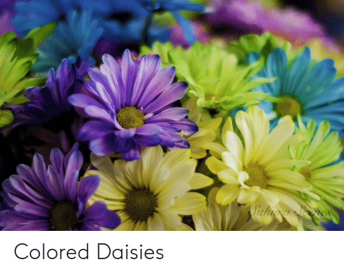 Daisies and Colored: Colored Daisies