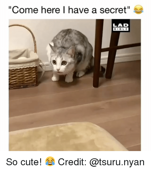 "Have A Secret: ""Come here I have a secret""  LAD  BIBLE So cute! 😂 Credit: @tsuru.nyan"