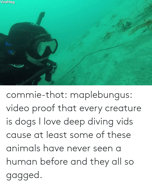 Before: commie-thot:  maplebungus: video proof that every creature is dogs  I love deep diving vids cause at least some of these animals have never seen a human before and they all so gagged.