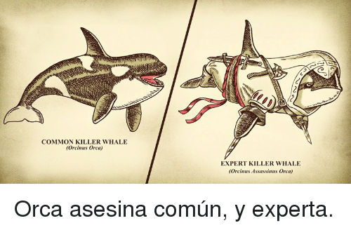 Common, Orca, and Whale: COMMON KILLER WHALE  (Orcinus Orca)  EXPERT KILLER WHALE  (Orcinus Assassinus Orca) <p>Orca asesina común, y experta.</p>