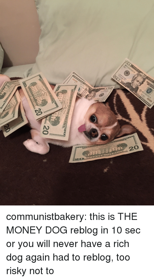 Money Dog: communistbakery:  this isTHE MONEY DOG reblog in 10 sec or you will never have a rich dog again   had to reblog, too risky not to