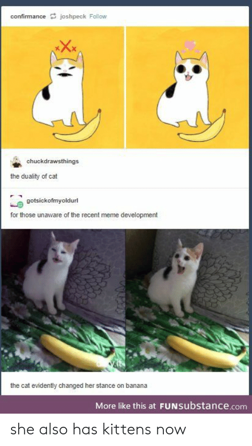 Kittens: confirmancejoshpeck Follow  chuckdrawsthings  the duality of cat  gotsickofmyoldurl  for those unaware of the recent meme development  the cat evidently changed her stance on banana  More like this at FUNsubstance.com she also has kittens now