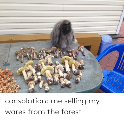 Consolation: consolation: me selling my wares from the forest