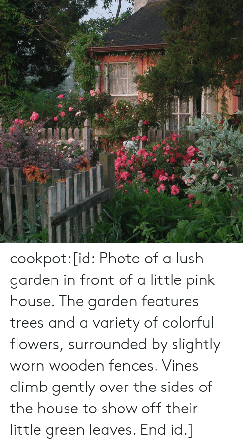Sides: cookpot:[id: Photo of a lush garden in front of a little pink house. The garden features trees and a variety of colorful flowers, surrounded by slightly worn wooden fences. Vines climb gently over the sides of the house to show off their little green leaves. End id.]