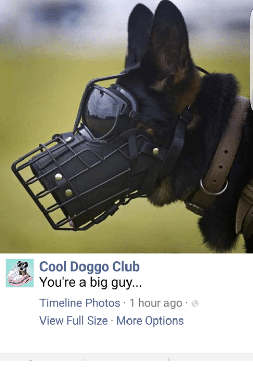 Your A Big Guy: Cool Doggo Club  You're a big guy  Timeline Photos 1 hour ago  View Full Size More Options