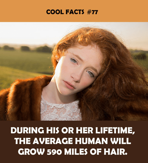 Facts, Cool, and Hair: COOL FACTS #77  DURING HIS OR HER LIFETIME,  THE AVERAGE HUMAN WILL  GROW 590 MILES OF HAIR.