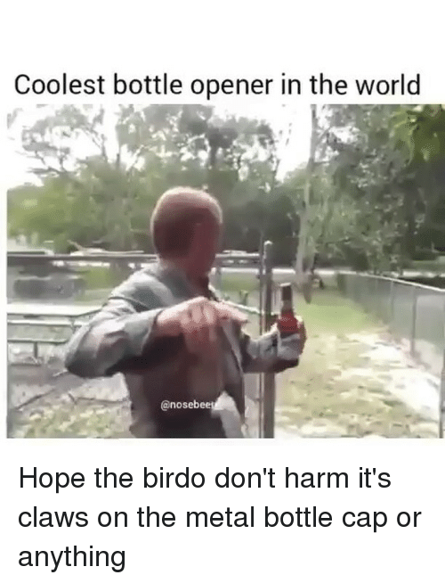 bottle cap: Coolest bottle opener in the world  @nostebee Hope the birdo don't harm it's claws on the metal bottle cap or anything