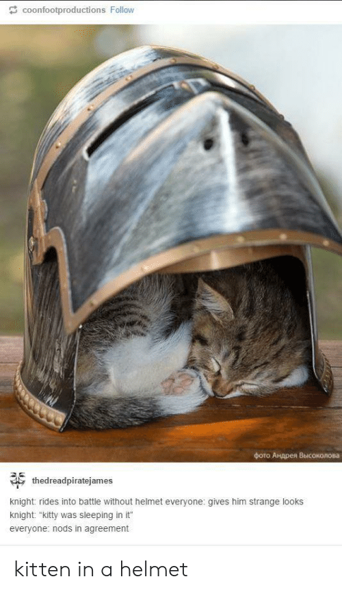 "Sleeping, Him, and Helmet: coonfootproductions Follow  фото Андрея Высоколова  thedreadpiratejames  knight: rides into battle without helmet everyone: gives him strange looks  knight: ""kitty was sleeping in it  everyone: nods in agreement kitten in a helmet"