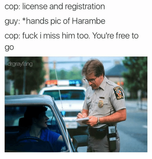 Handness: cop: license and registration  guy: *hands pic of Harambe  cop: fuck i miss him too. You're free to  go  drgrayfang