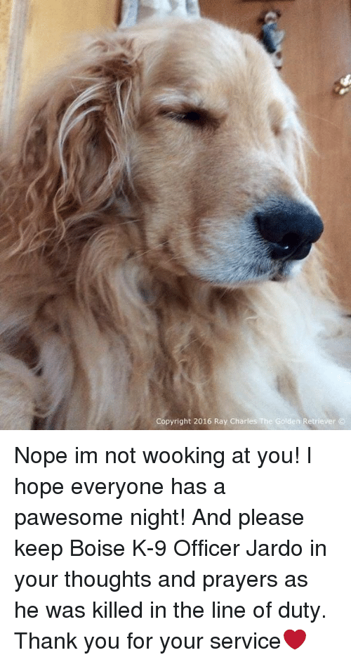 Memes, Golden Retriever, and Office: Copyright 2016 Ray Charles The Golden Retriever Nope im not wooking at you! I hope everyone has a pawesome night! And please keep Boise K-9 Officer Jardo in your thoughts and prayers as he was killed in the line of duty. Thank you for your service❤️
