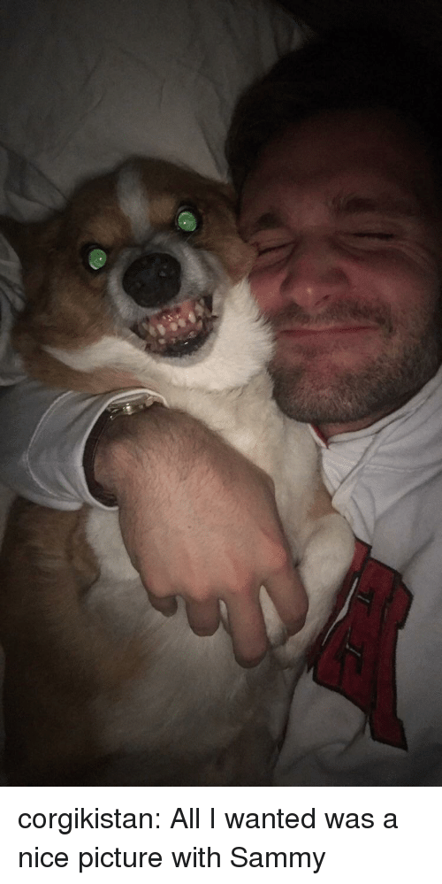 Nice Picture: corgikistan:  All I wanted was a nice picture with Sammy