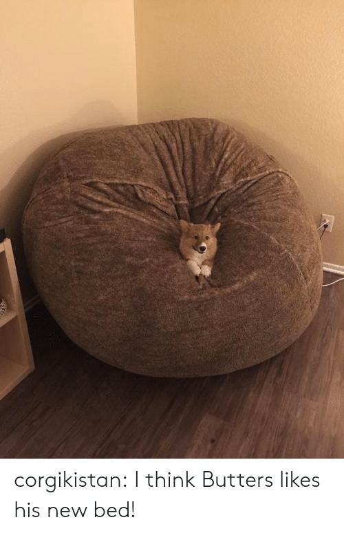 butters: corgikistan:  I think Butters likes his new bed!