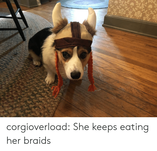 Braids, Tumblr, and Blog: corgioverload:  She keeps eating her braids