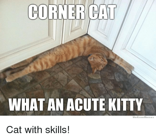 We Know Meme: CORNER CAT  WHAT AN ACUTE KITTY  We Know Memes Cat with skills!