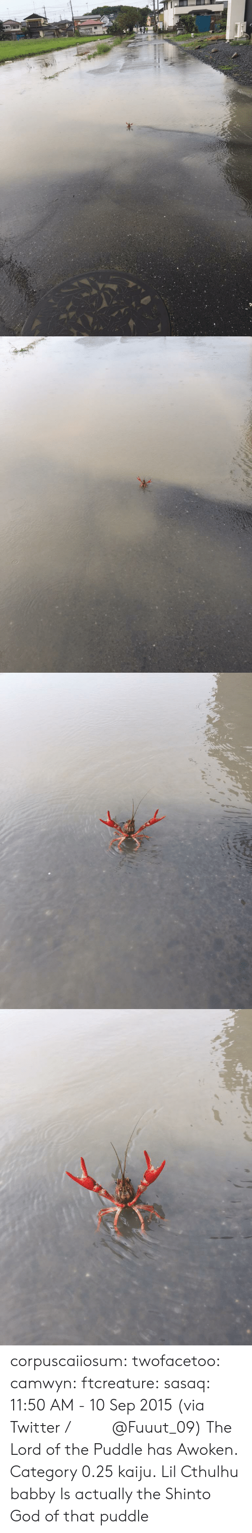 10 Sep: corpuscaiiosum: twofacetoo:   camwyn:  ftcreature:  sasaq:  11:50 AM - 10 Sep 2015 (via Twitter / ふ み な @Fuuut_09)   The Lord of the Puddle has Awoken.  Category 0.25 kaiju.  Lil Cthulhu babby   Is actually the Shinto God of that puddle