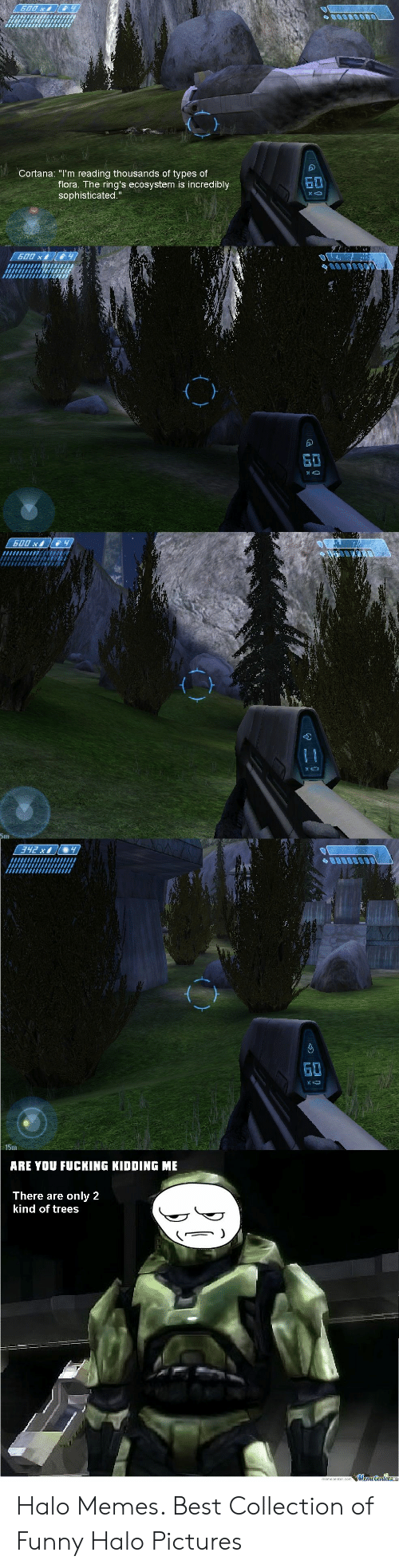 "Fucking, Funny, and Halo: Cortana: ""I'm reading thousands of types of  flora. The ring's ecosystem is incredibly  sophisticated.""  S0  15m  ARE YOU FUCKING KIDDING ME  There are only 2  kind of trees Halo Memes. Best Collection of Funny Halo Pictures"