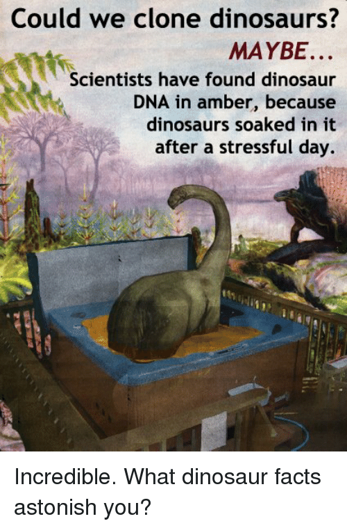 Dinosaur, Facts, and Memes: Could we clone dinosaurs?  MAYBE.  Scientists have found dinosaur  DNA in amber, because  dinosaurs soaked in it  after a stressful day. Incredible.  What dinosaur facts astonish you?