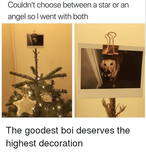 Angel, Star, and Decoration: Couldn't choose between a star or an  angel so l went with both The goodest boi deserves the highest decoration