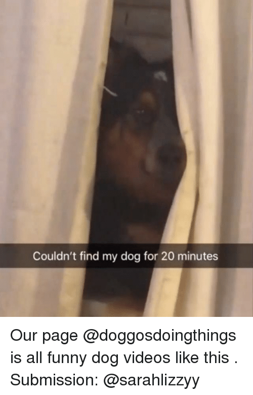 submission: Couldn't find my dog for 20 minutes Our page @doggosdoingthings is all funny dog videos like this . Submission: @sarahlizzyy
