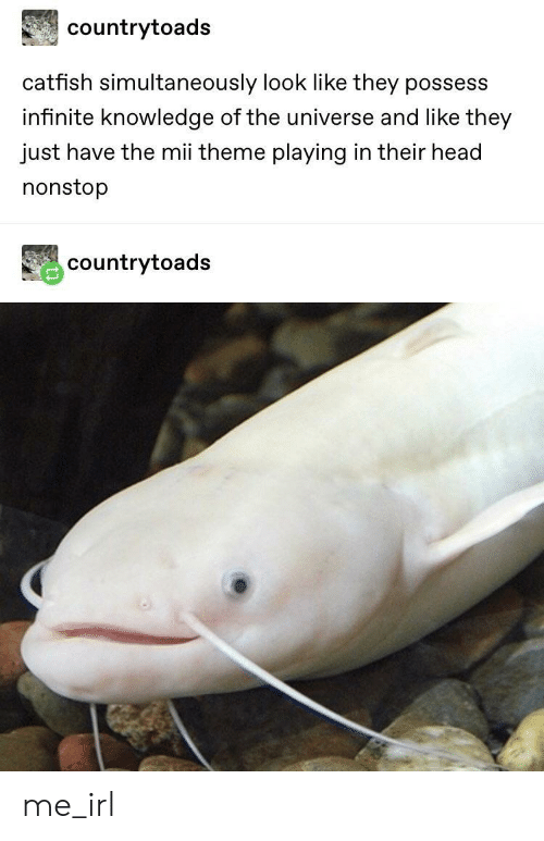 Simultaneously: countrytoads  catfish simultaneously look like they possess  infinite knowledge of the universe and like they  just have the mii theme playing in their head  nonstop  countrytoads me_irl