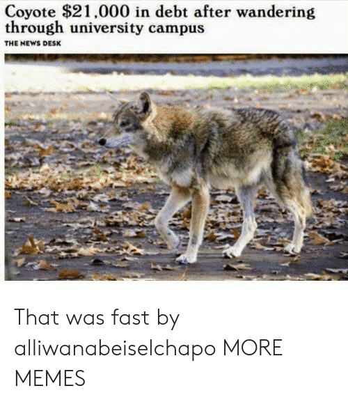 That Was Fast: Coyote $21.000 in debt after wandering  through university campus  THE NEWS DESK That was fast by alliwanabeiselchapo MORE MEMES