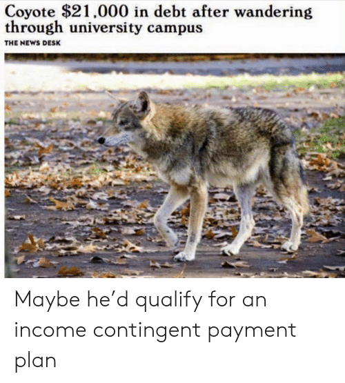 News, Coyote, and Desk: Coyote $21,000 in debt after wandering  through university campus  THE NEWS DESK Maybe he'd qualify for an income contingent payment plan