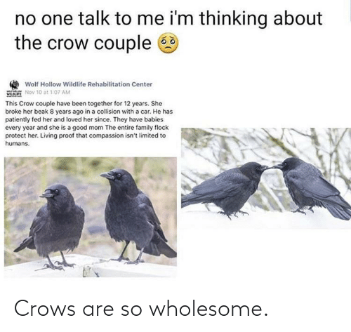 Wholesome: Crows are so wholesome.