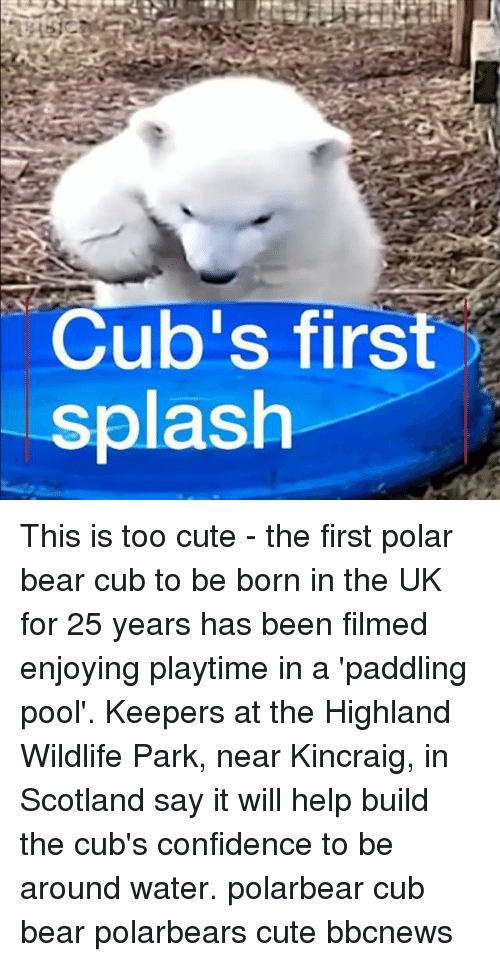 Confidence, Cute, and Memes: Cub's first  splash This is too cute - the first polar bear cub to be born in the UK for 25 years has been filmed enjoying playtime in a 'paddling pool'. Keepers at the Highland Wildlife Park, near Kincraig, in Scotland say it will help build the cub's confidence to be around water. polarbear cub bear polarbears cute bbcnews
