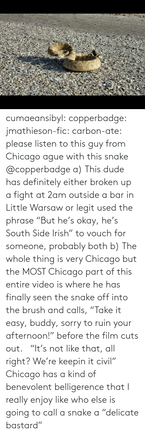 "Either: cumaeansibyl: copperbadge:  jmathieson-fic:  carbon-ate: please listen to this guy from Chicago ague with this snake @copperbadge  a) This dude has definitely either broken up a fight at 2am outside a bar in Little Warsaw or legit used the phrase ""But he's okay, he's South Side Irish"" to vouch for someone, probably both b) The whole thing is very Chicago but the MOST Chicago part of this entire video is where he has finally seen the snake off into the brush and calls, ""Take it easy, buddy, sorry to ruin your afternoon!"" before the film cuts out.    ""It's not like that, all right? We're keepin it civil"" Chicago has a kind of benevolent belligerence that I really enjoy like who else is going to call a snake a ""delicate bastard"""