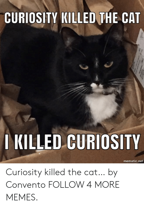 curiosity killed the cat: CURIOSITY KILLED THE CAT  I KILLED CURIOSITY  mematic.net Curiosity killed the cat… by Convento FOLLOW 4 MORE MEMES.