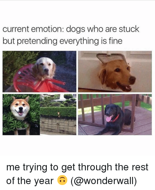 Wonderwall: current emotion: dogs who are stuck  but pretending everything is fine me trying to get through the rest of the year 🙃 (@wonderwall)