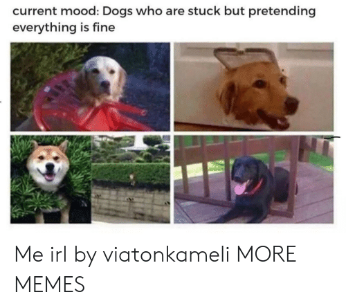Dank, Dogs, and Memes: current mood: Dogs who are stuck but pretending  everything is fine Me irl by viatonkameli MORE MEMES